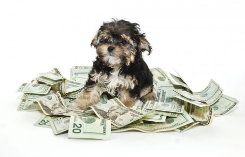 14 ways to save money as a new pet owner